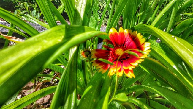 Green Gras  Flower Red Yellow Nature In My Garden Love Effect Zoom Summer Love The Summer The Essence Outdoor