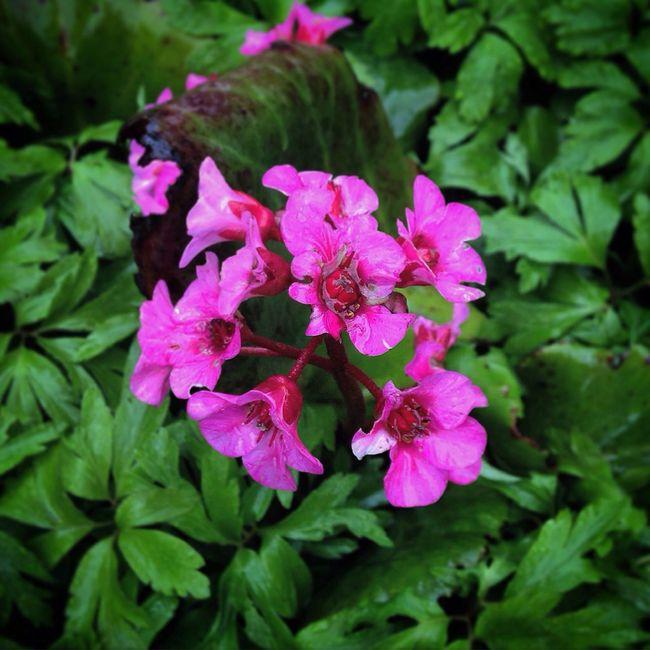 Flowerlovers Flowers Flowermagic Flowers, Nature And Beauty Summer Floweroftheday Flower Erlangen Germany Flowers_collection Flower Collection Flowers,Plants & Garden Flowerpower Spring Beautiful Beauty