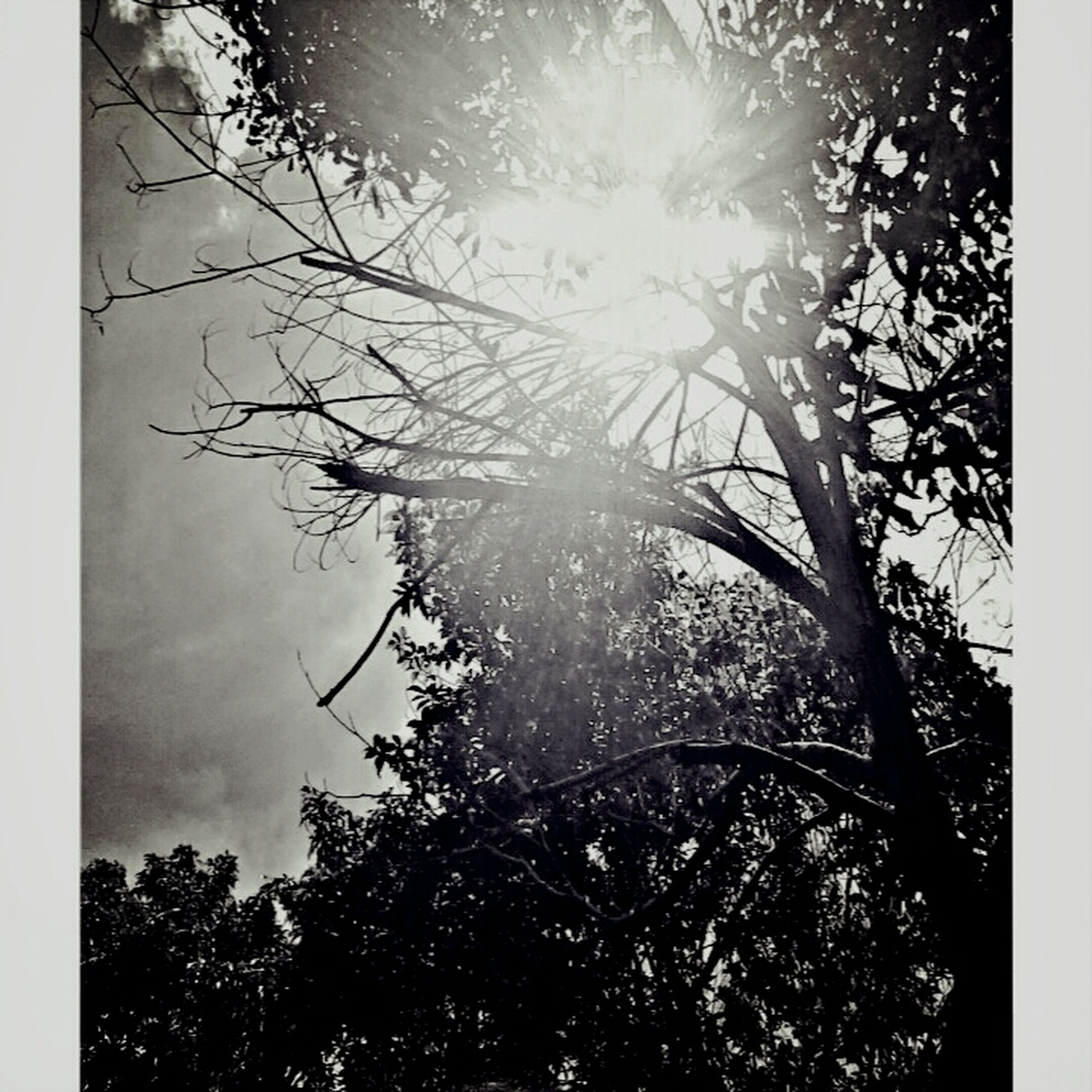 transfer print, tree, low angle view, branch, auto post production filter, sun, silhouette, growth, sunlight, bare tree, nature, sky, tranquility, sunbeam, beauty in nature, lens flare, outdoors, no people, day, tree trunk