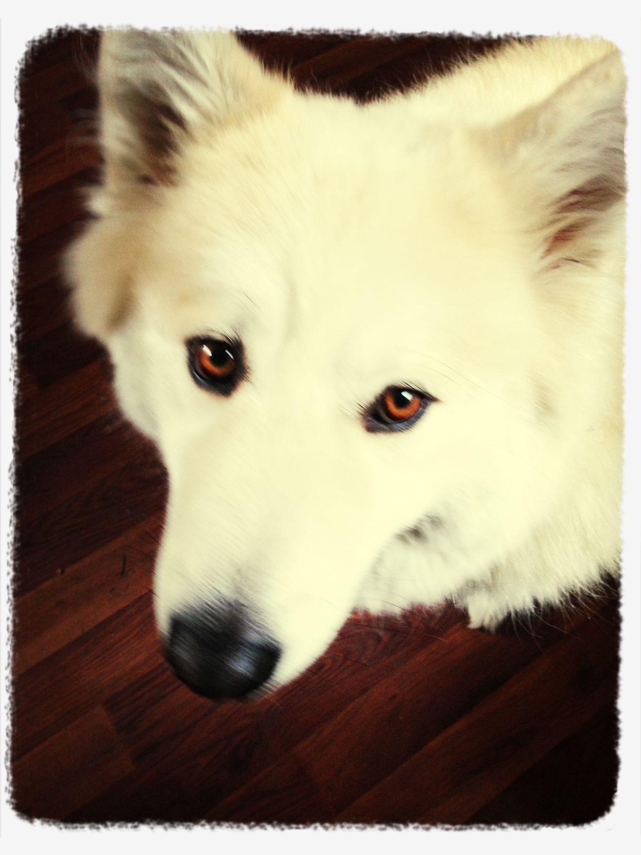 office dog :-)