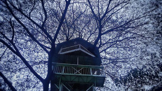 Tree Forest Dark