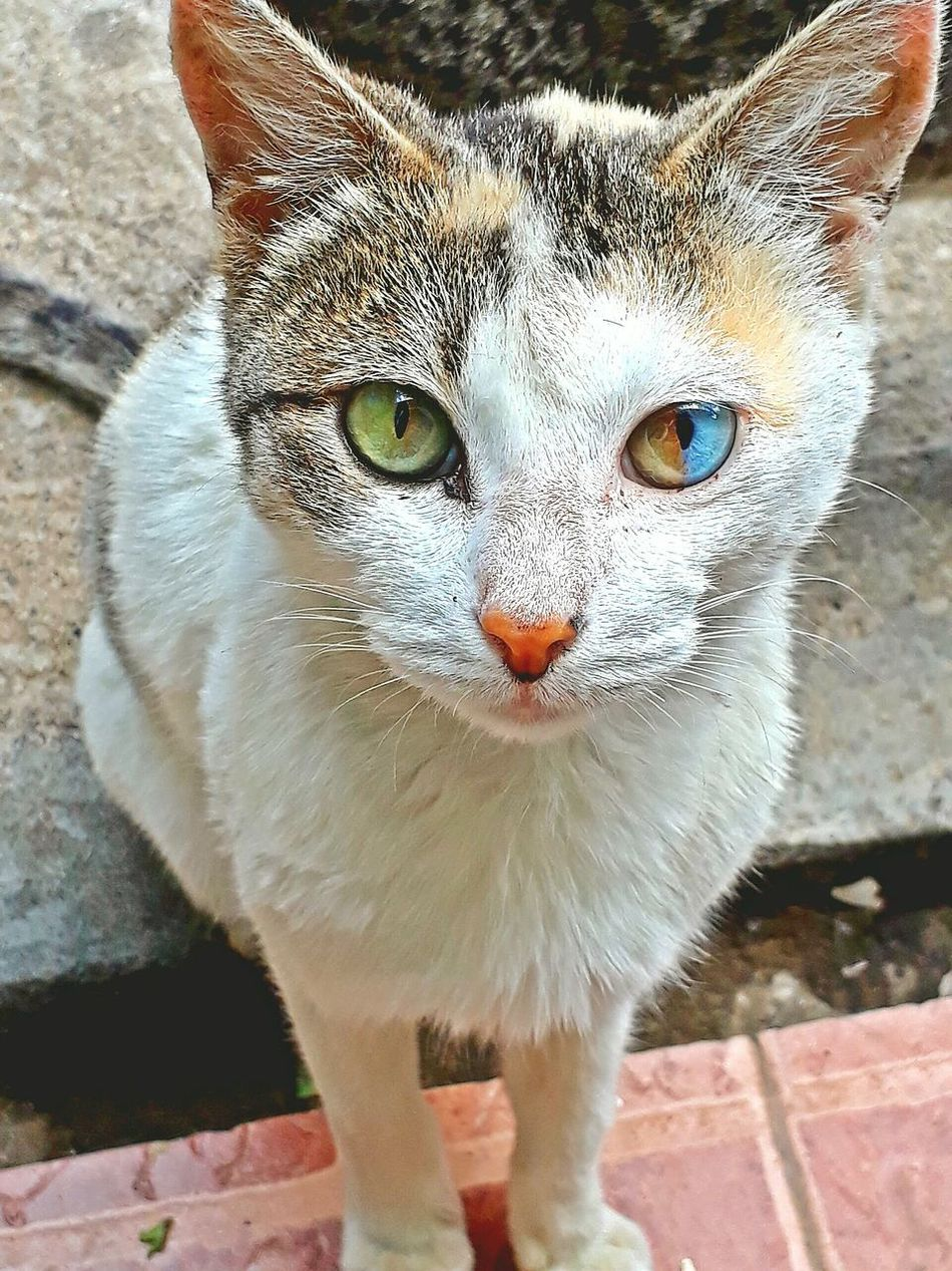 The 🐱 diary... beautiful imperfection... Looking At Camera One Animal Animal Themes Domestic Cat Feline Close-up Pets Cats Of EyeEm Cat Cat Lovers Portrait Cateyes Domestic Animals
