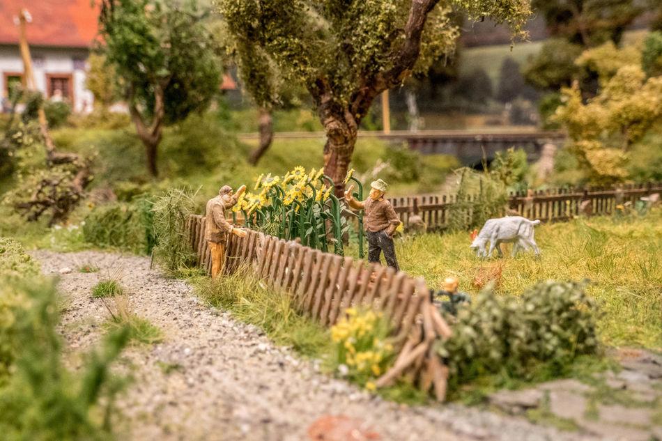 Day First Eyeem Photo Green H0 Landscape Miniature Old Men Outdoors