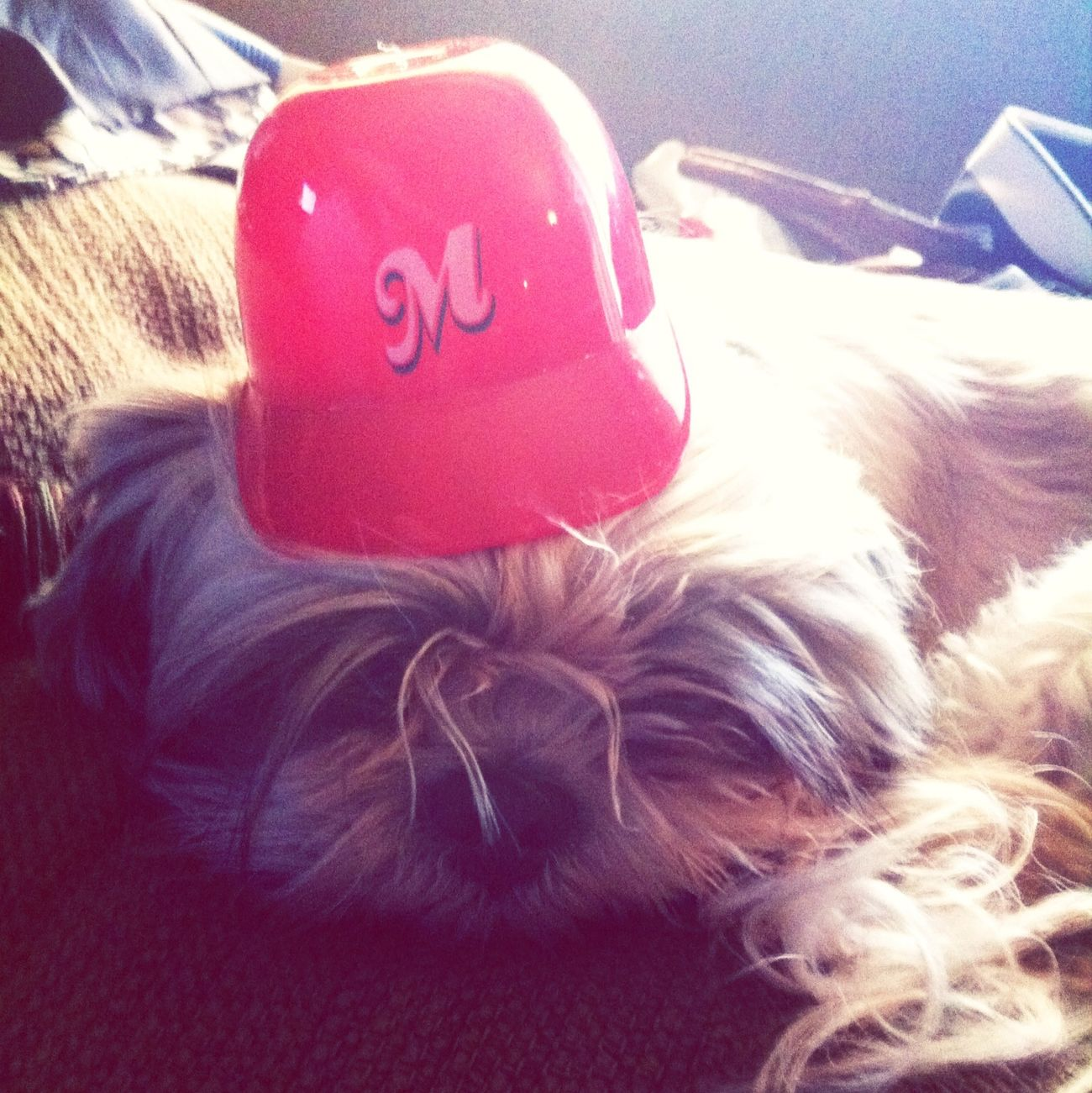 Memphis RedBirds My Dog Is Cooler Than Your Kids Shih Tzu Good Dog Rolo is sad because the RedBirds lost in the playoffs.