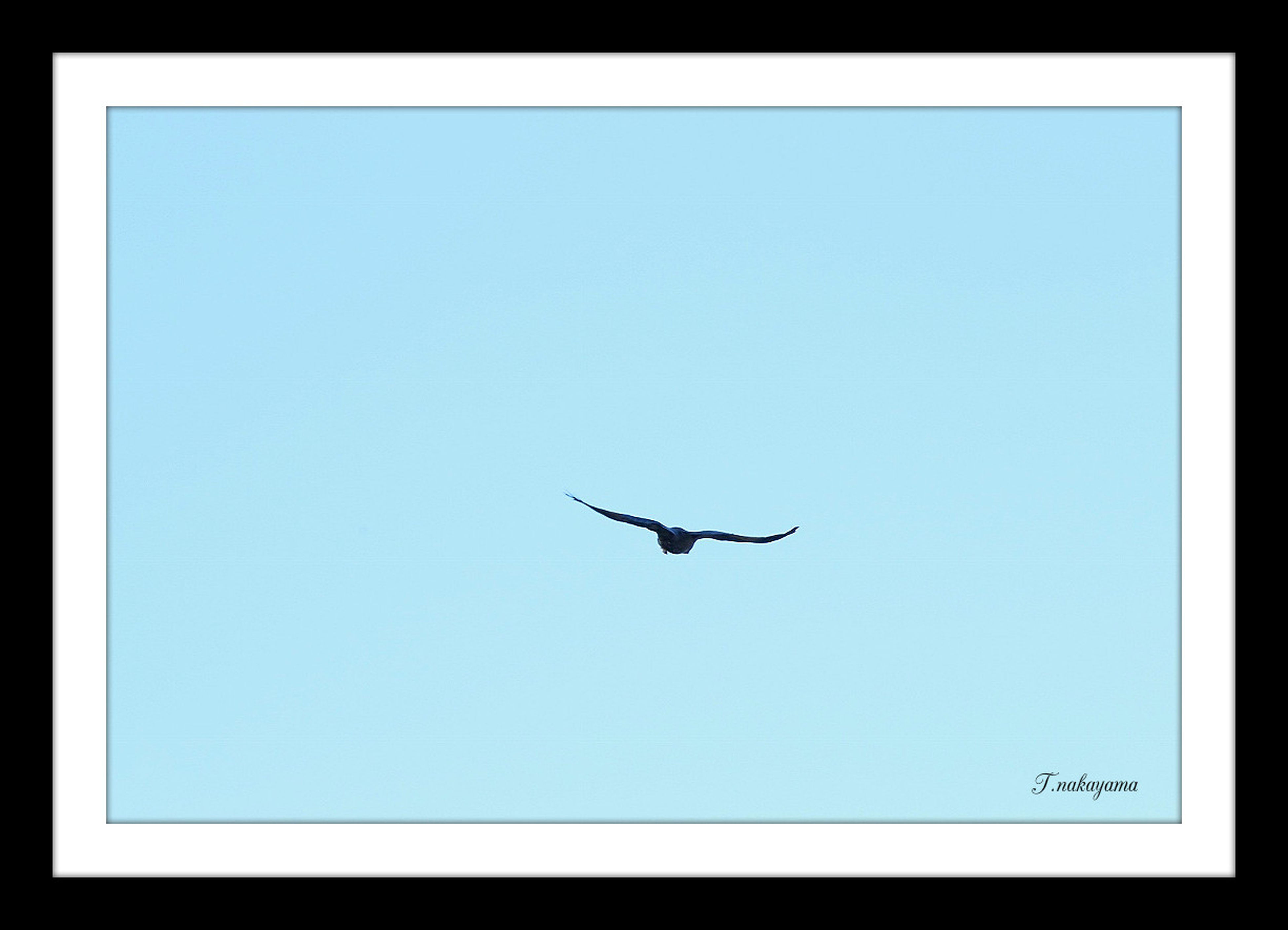flying, bird, animal themes, wildlife, animals in the wild, clear sky, transfer print, one animal, copy space, low angle view, blue, spread wings, auto post production filter, mid-air, nature, silhouette, no people, seagull, flight, sky