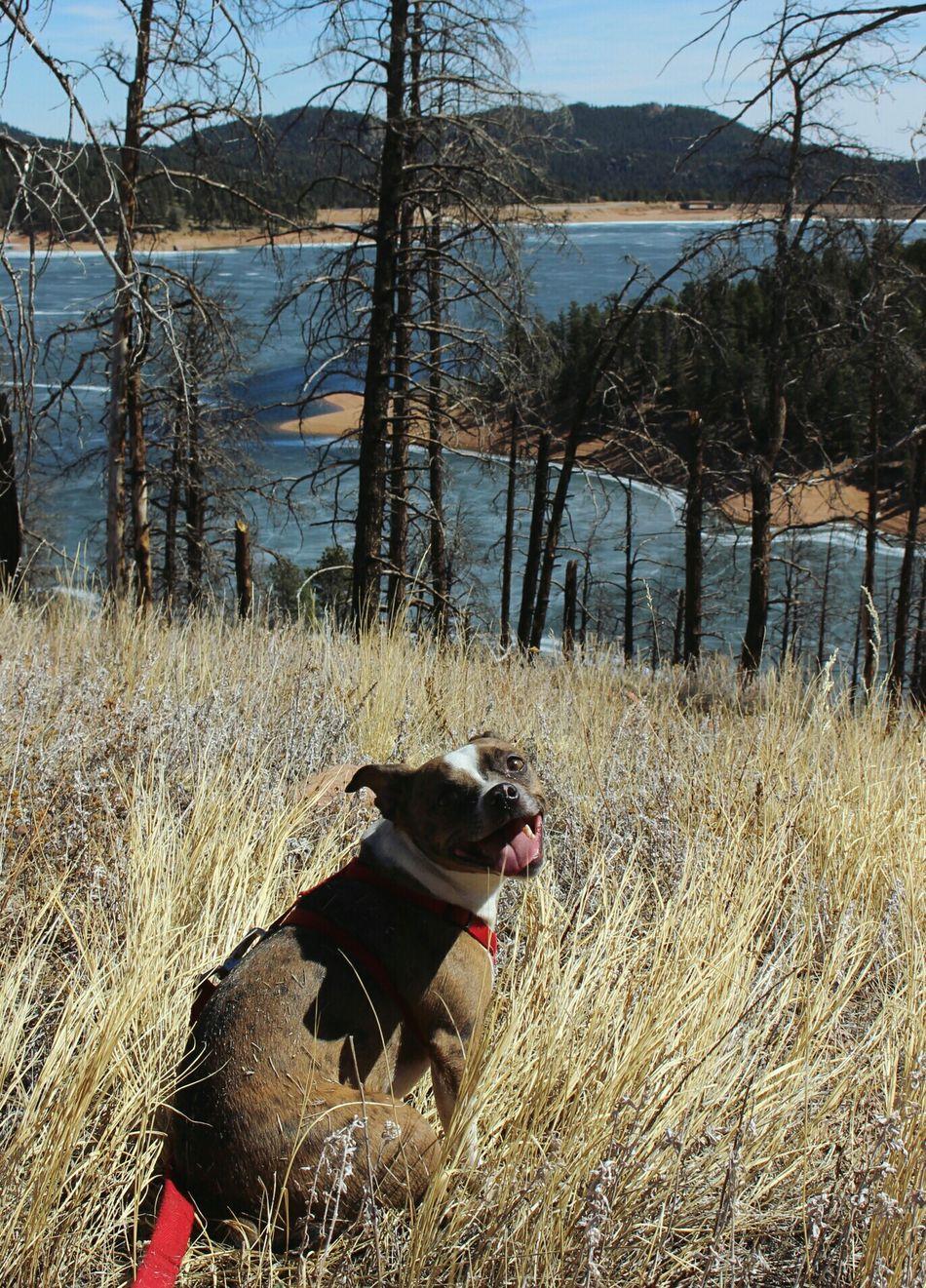 Roscoe Dog Outdoors Nature Pets Beautiful Coloradohiking Colorado