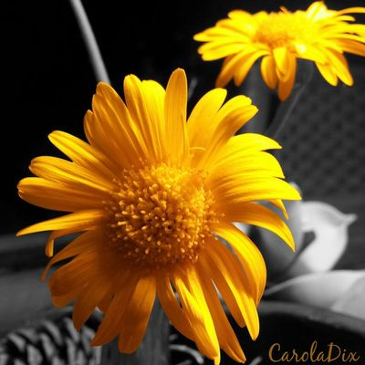 TheWorldNeedsMoreYellow by Carola Dix