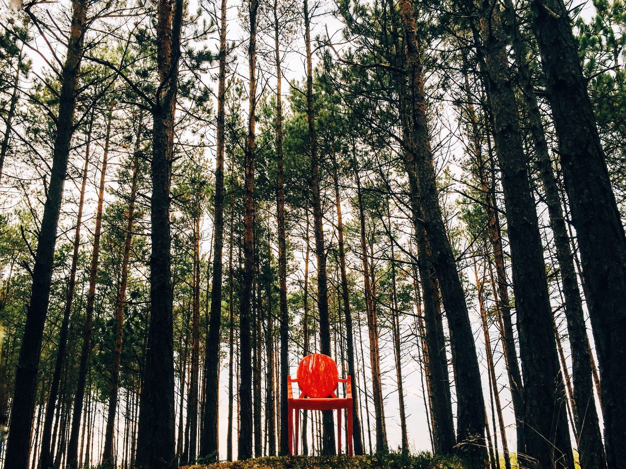 Chair Forest Trees TreePorn Landscape EyeEm Best Shots - Landscape Nature EyeEm Best Shots - Nature EyeEm Nature Lover IPSScenery
