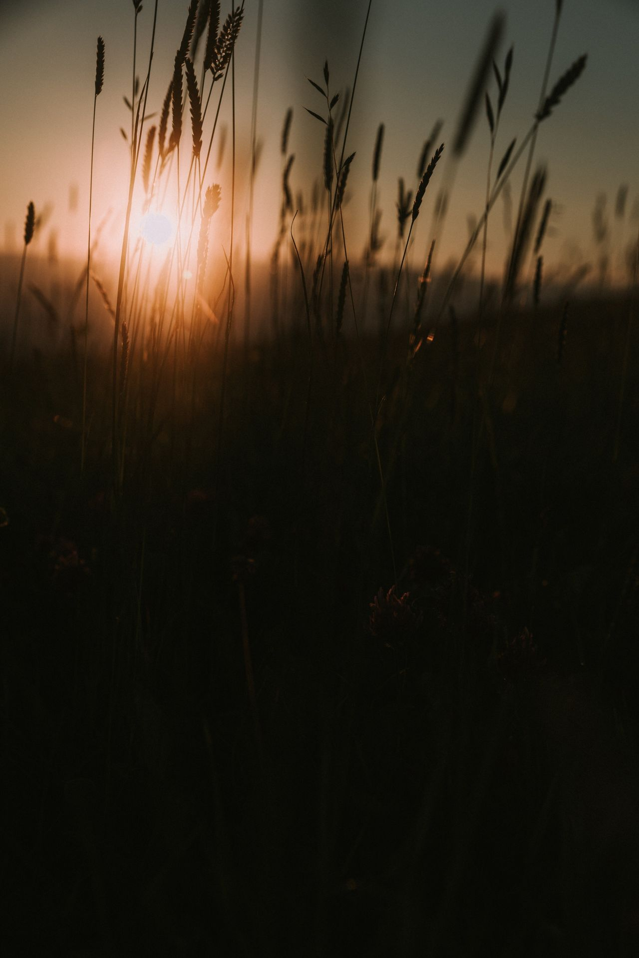 The moment of a magical golden hour Sunset Growth Silhouette Nature Plant Tranquil Scene No People Beauty In Nature Tranquility Outdoors Freshness Nature Flower Collection EyeEm Gallery Summertime EyeEm Nature Lover EyeEm Best Shots Light Up Your Life Golden Hour Outdoor Photography