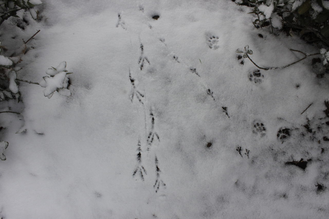 Animal Track Cold Temperature Day Field High Angle View Nature No People Outdoors Paw Print Sand
