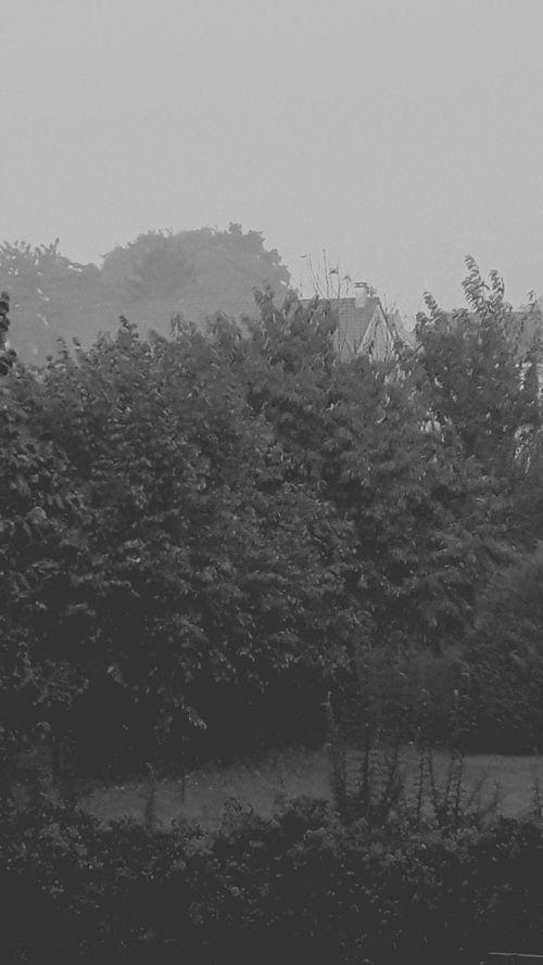 Storm Rain Wind Dramatic Weather Blackandwhite Photography Eye4photography  EyeEm Gallery The Week On EyeEm