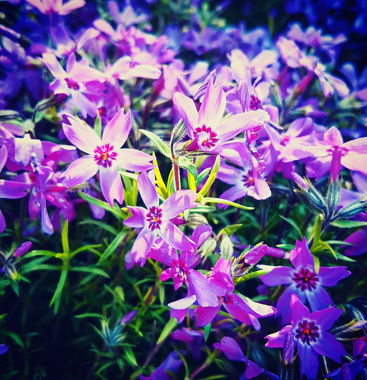 Spring is upon us! Butte County California Nature Photography Serene Outdoors Flowers Flowers Through Filters