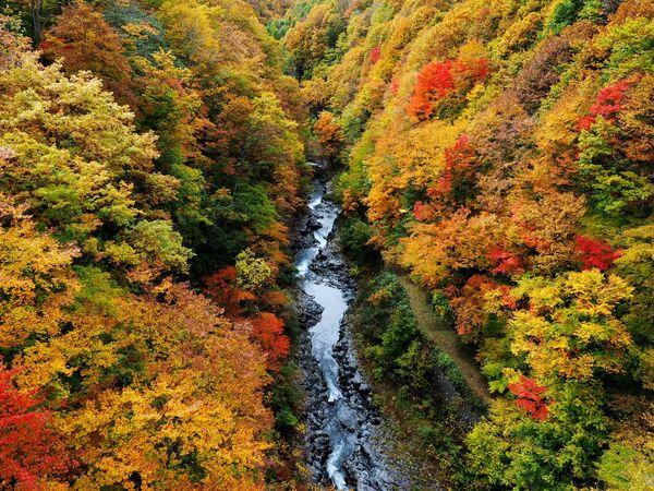 Nakatsugawa Valley Beauty In Nature Autumn Leaves Autumn Leaves Autumn Leaves Is A Great Leaf Peeping Autumn Bloom Great Japanese Landscape Urabandai District Fukusima,japan