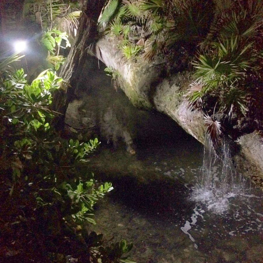 Photo Shoot Little Cave Nightphotography Taking Photos