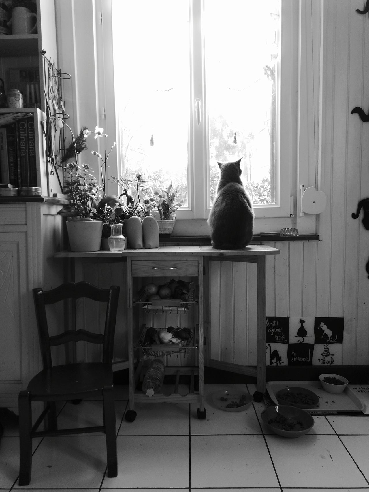 Chat à la fenêtre.🐈(recto)Indoors  Window Home Interior No People Day Chair Cat Feline Domestic Cat Animal Themes One Animal Pets Domestic Animals Bnw Black And White
