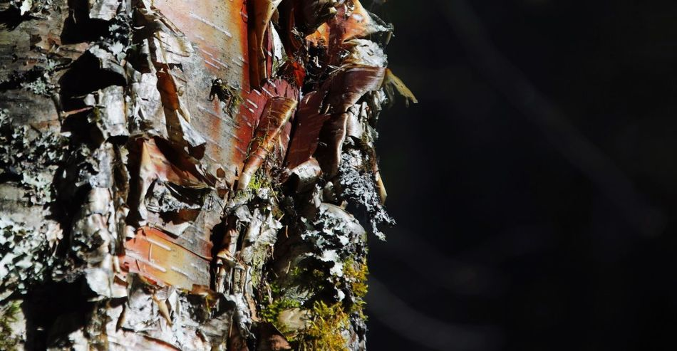 No People Nature Close-up Outdoors Day Beauty In Nature Tree Bark Rind