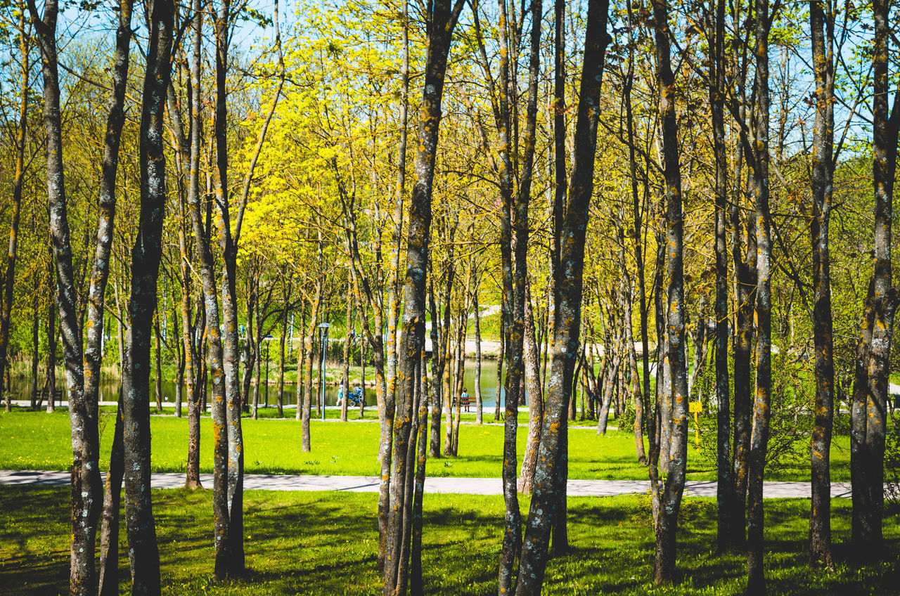 City Day Nature Park Pskov Russia Scenics Tranquility Tree Tree Trunk Walking Around