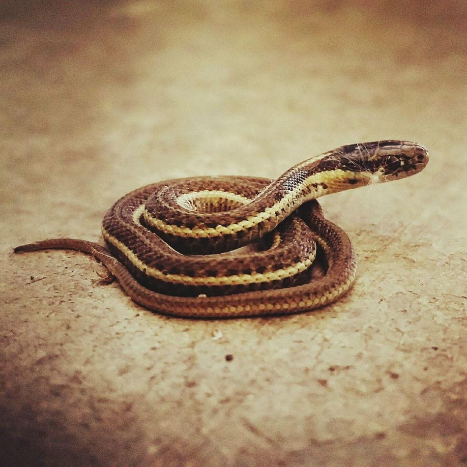 Baby Snake Nature Outdoors