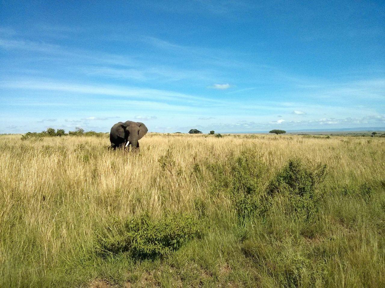 The Elephant. · Masai Mara Kenya Africa Safari Nature Landscape Animals Beautiful Nature Nature On Your Doorstep