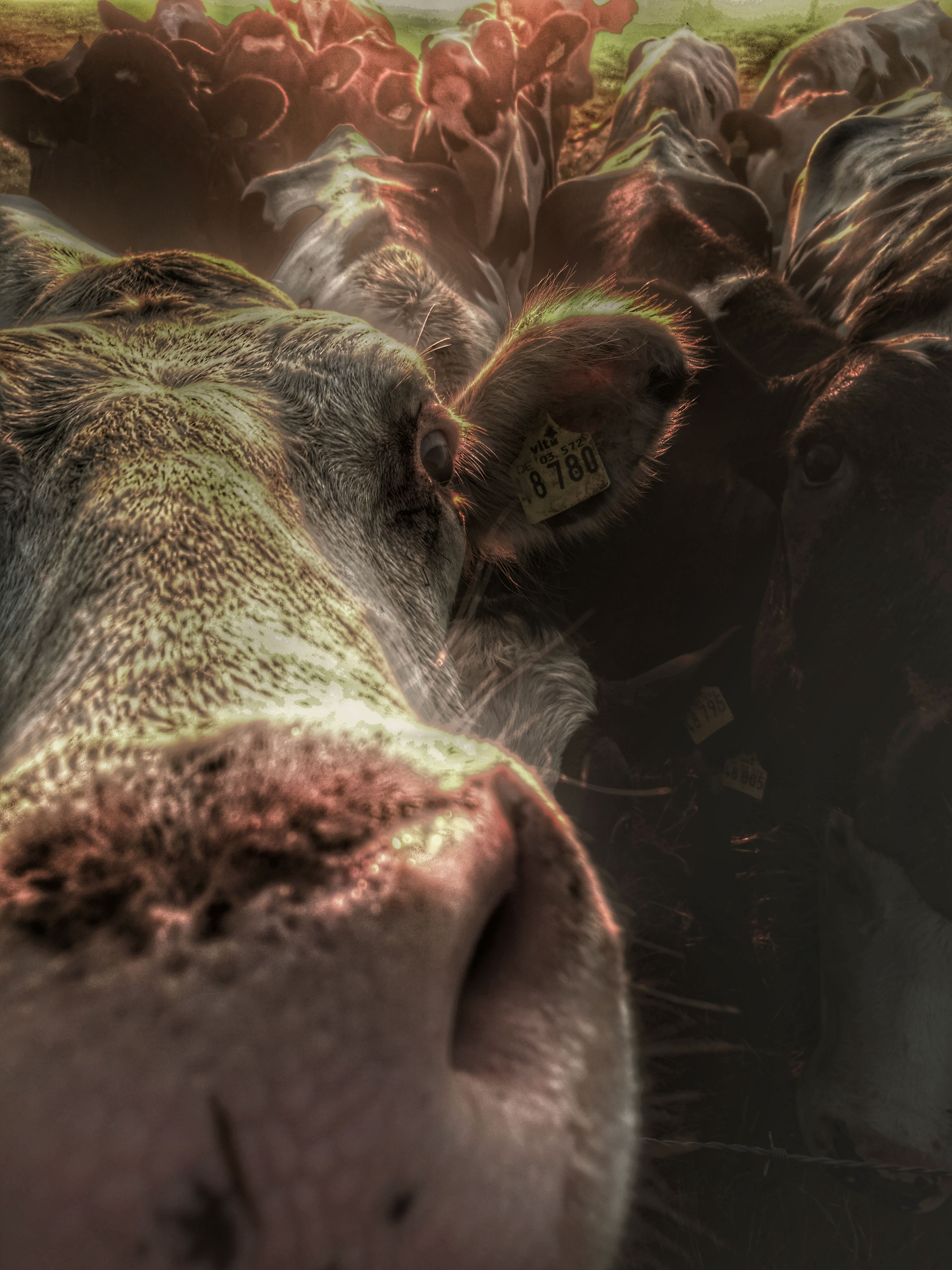 one animal, close-up, mammal, indoors, part of, selective focus, domestic animals, animal nose, resting, zoology, no people