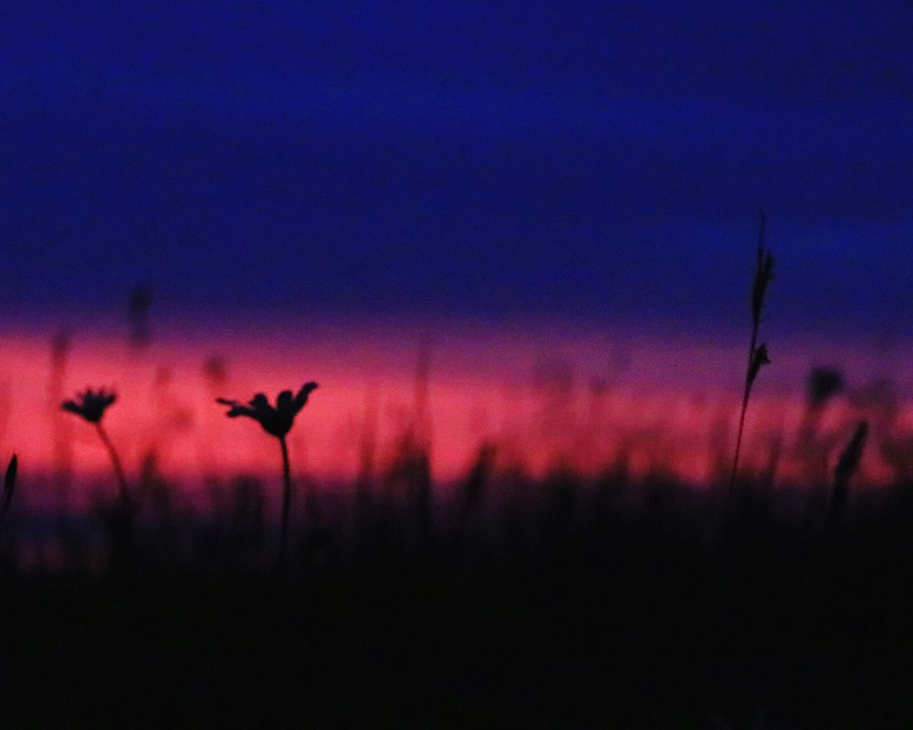 sunset, silhouette, nature, beauty in nature, outdoors, no people, animal themes, growth, scenics, tranquility, plant, animals in the wild, one animal, sky, bird, night, close-up