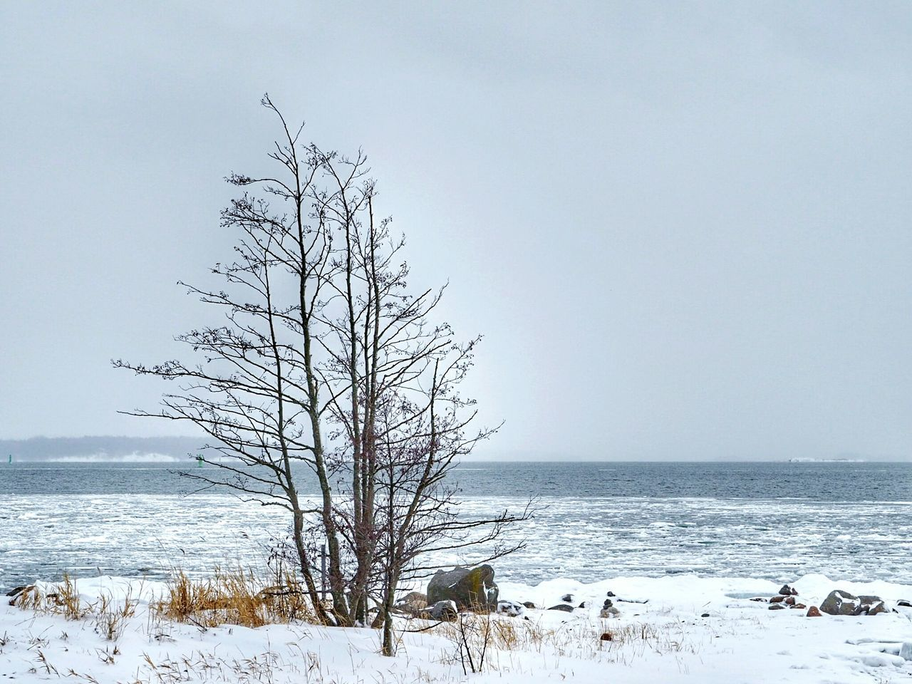 Nature Water Tree Outdoors Landscape No People Sky Cold Temperature Sea Snow Horizon Over Water Day Beauty In Nature Beach Frozen Sea Frozen Nature Ice Icedwater Bare Tree Winter Tranquility Winter Nature Outside Winter Time