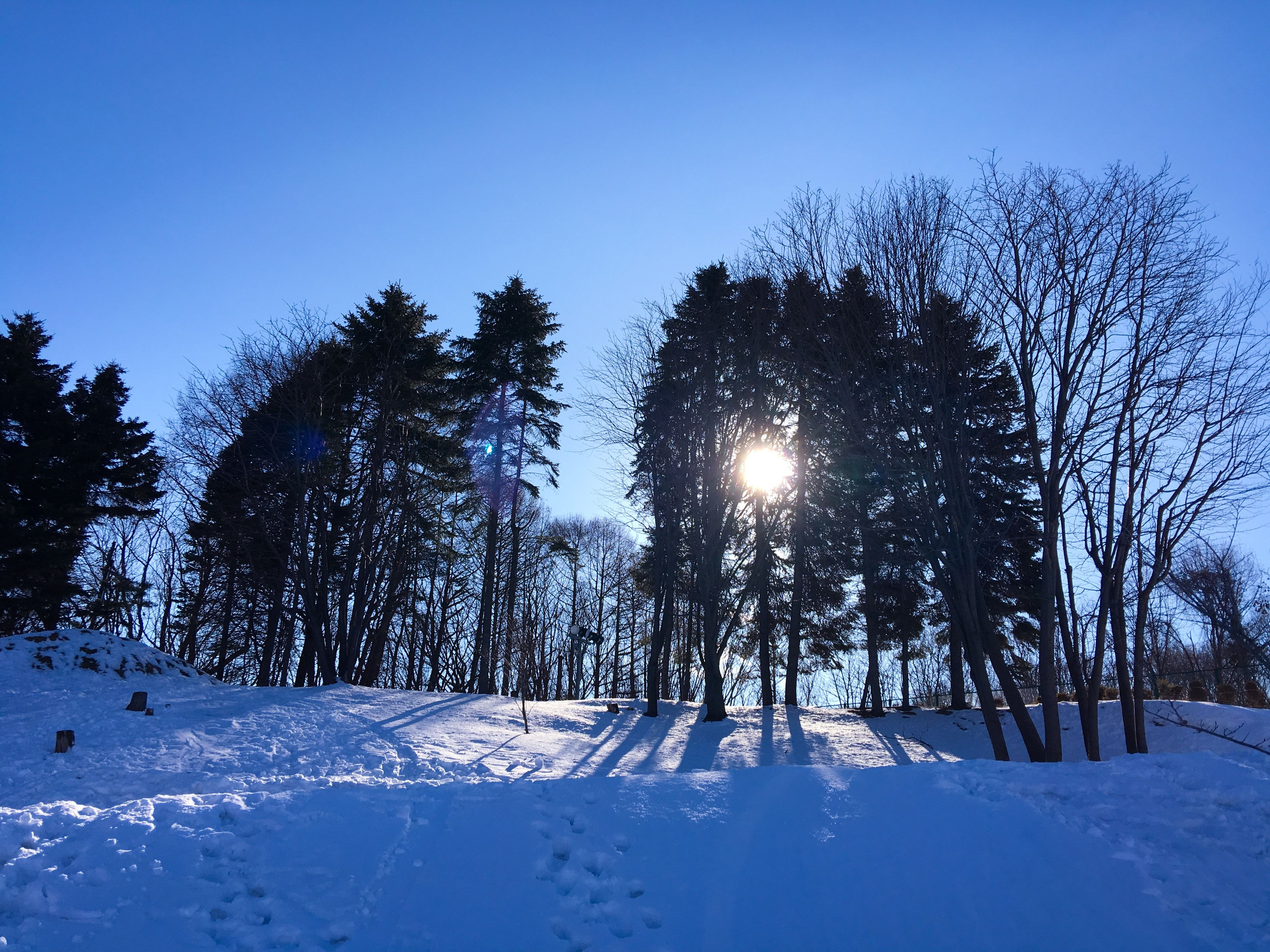 snow, winter, cold temperature, clear sky, season, tree, tranquility, weather, tranquil scene, nature, frozen, beauty in nature, field, covering, bare tree, scenics, landscape, sun, blue, sunlight
