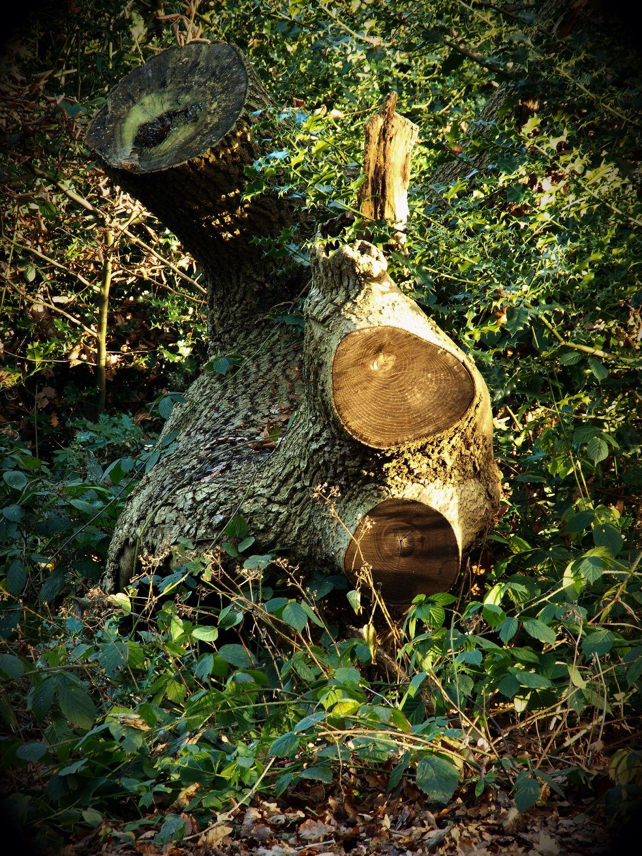 Steve Merrick No People Zuiko Trees Stevesevilempire TreePorn Tree Trunk Hampstead Heath Olympus London