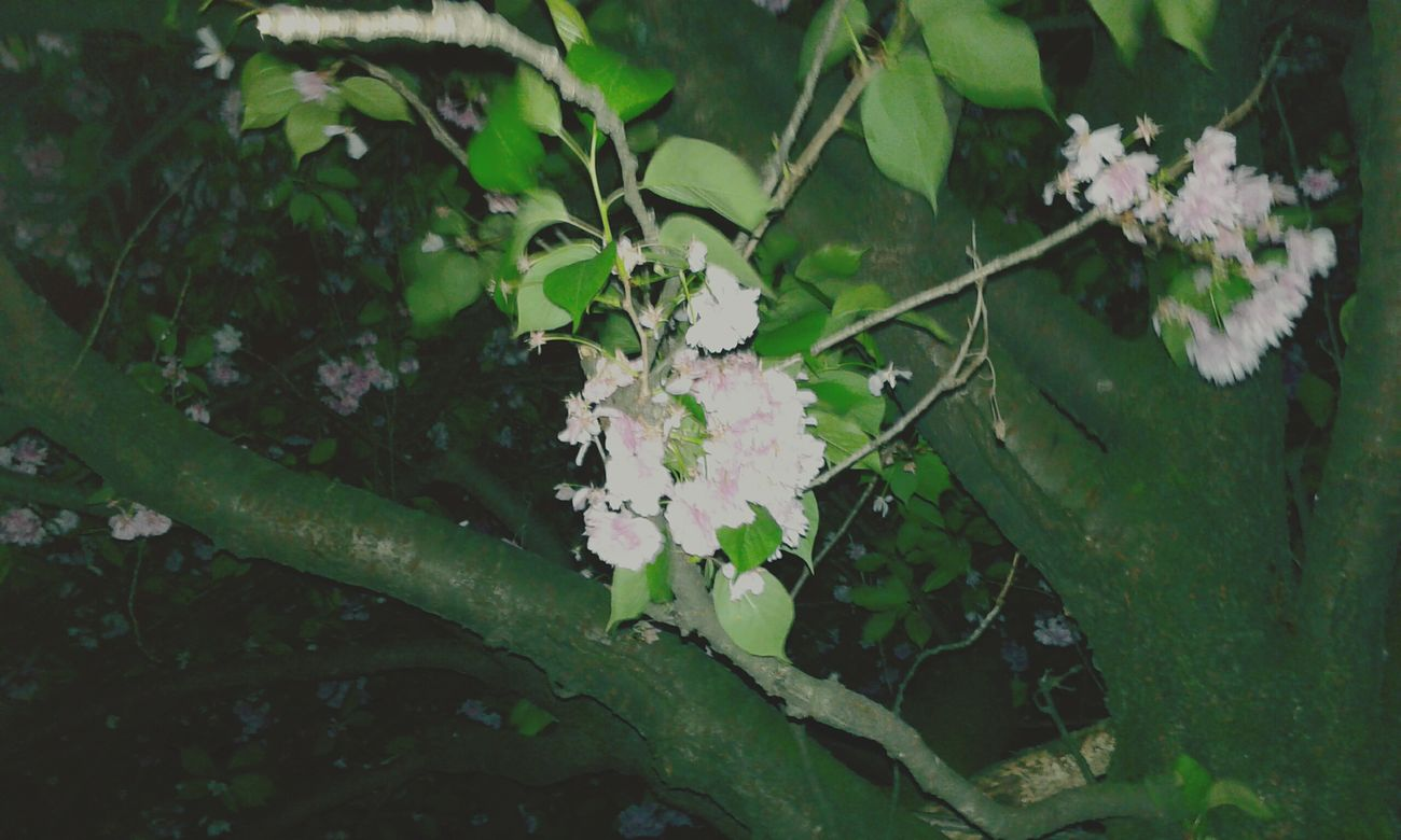 Petit Nuit