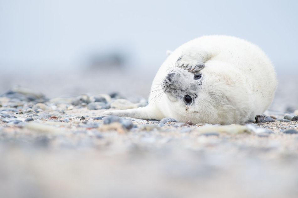 Beautiful stock photos of seal,  Animal Themes,  Animals In The Wild,  Aquatic Mammal,  Close-Up
