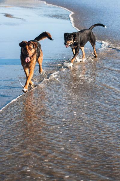 Walking the line. Beach Dog Huntaway New Zealand Pets Sea Water EyeEm Ready