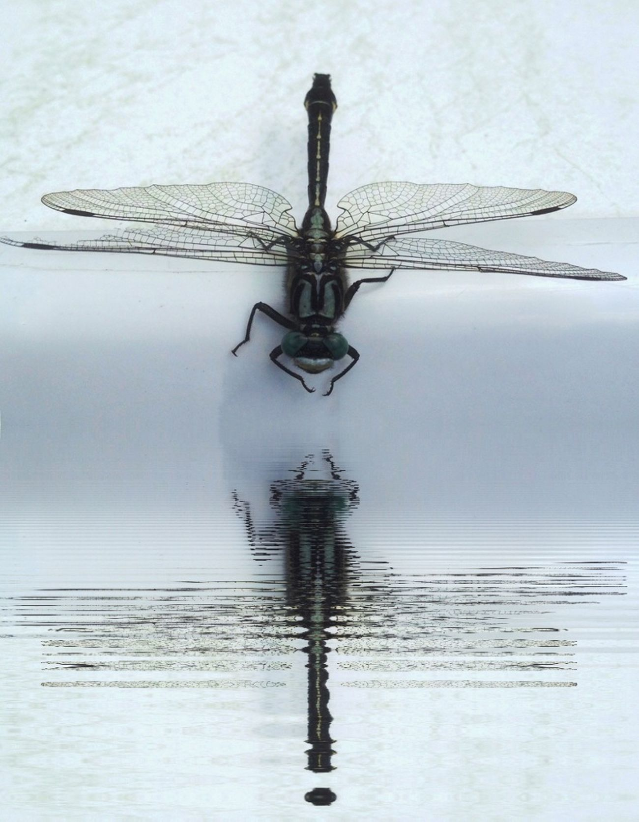 Dragonfly Insect Insects  Well Hi There ( ;'! ✋✌
