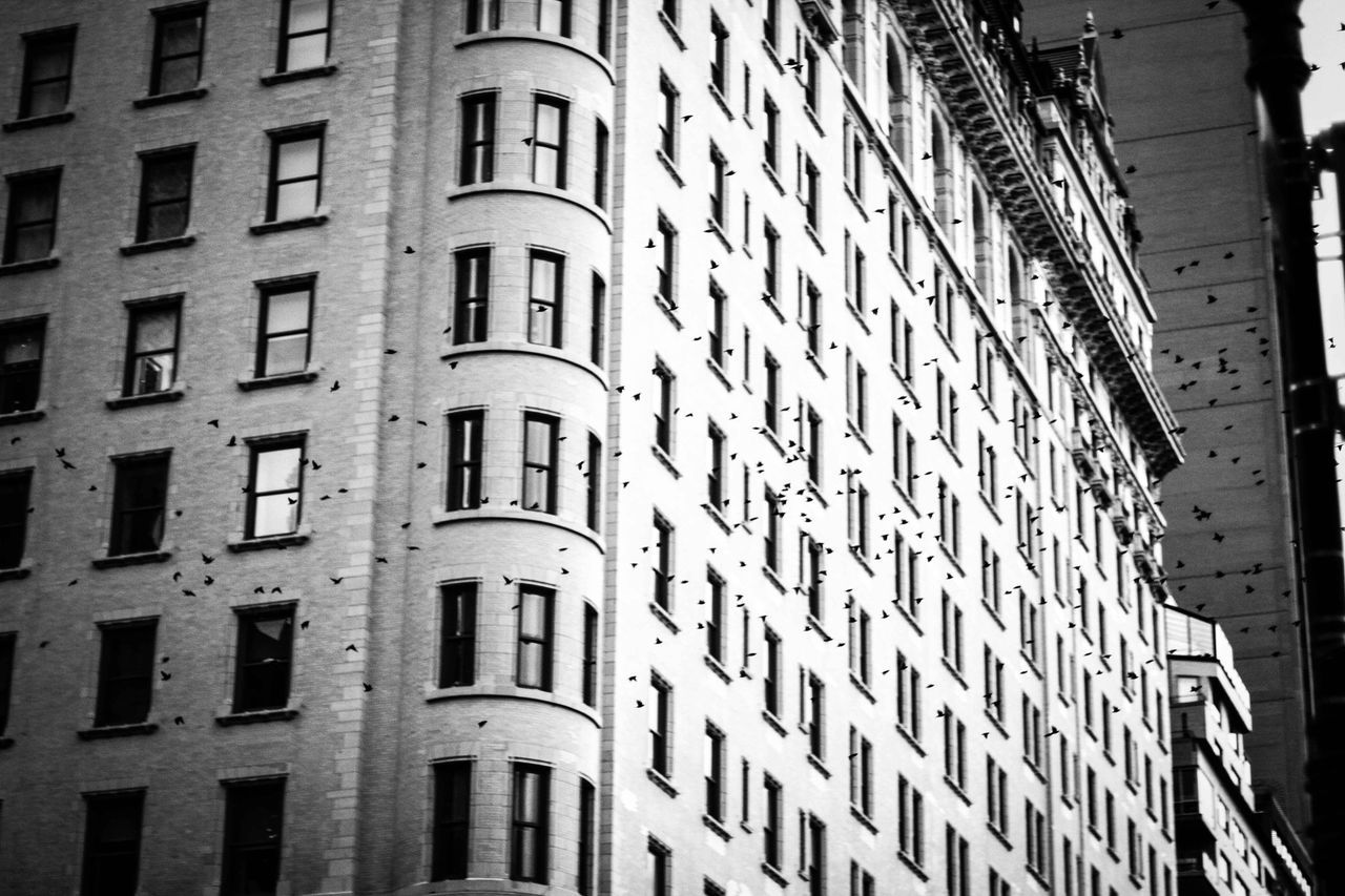 Birds Building Exterior Architecture Built Structure Window City Outdoors No People Day Animal Newyork Newyorkcity Traveling Animal Themes USA Black&white Black And White Photography Blackandwhite Photography Black & White Schwarzweiß Blackandwhite Animals Travel Bird Photography Bird Birds