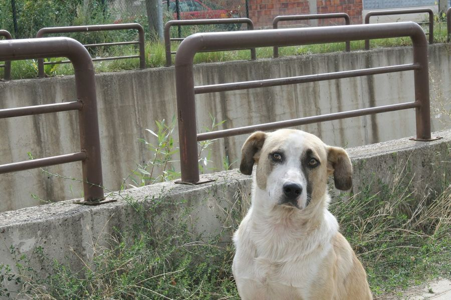 Doge 😆 Check This Out Amateurphotography Amateurphotographer  Beautiful Creature