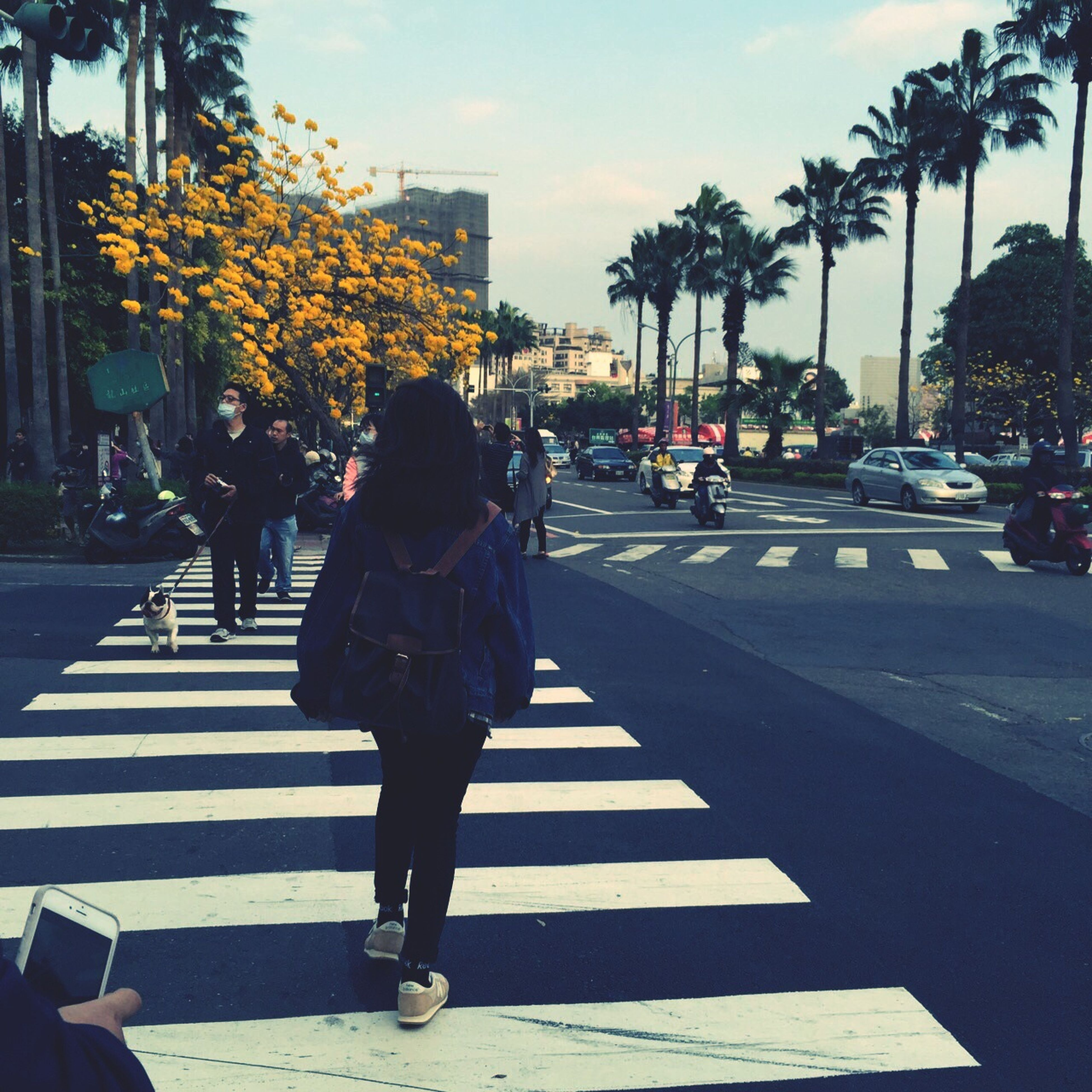 lifestyles, leisure activity, walking, street, men, person, tree, rear view, full length, palm tree, city life, road, sky, city, transportation, casual clothing, outdoors, the way forward