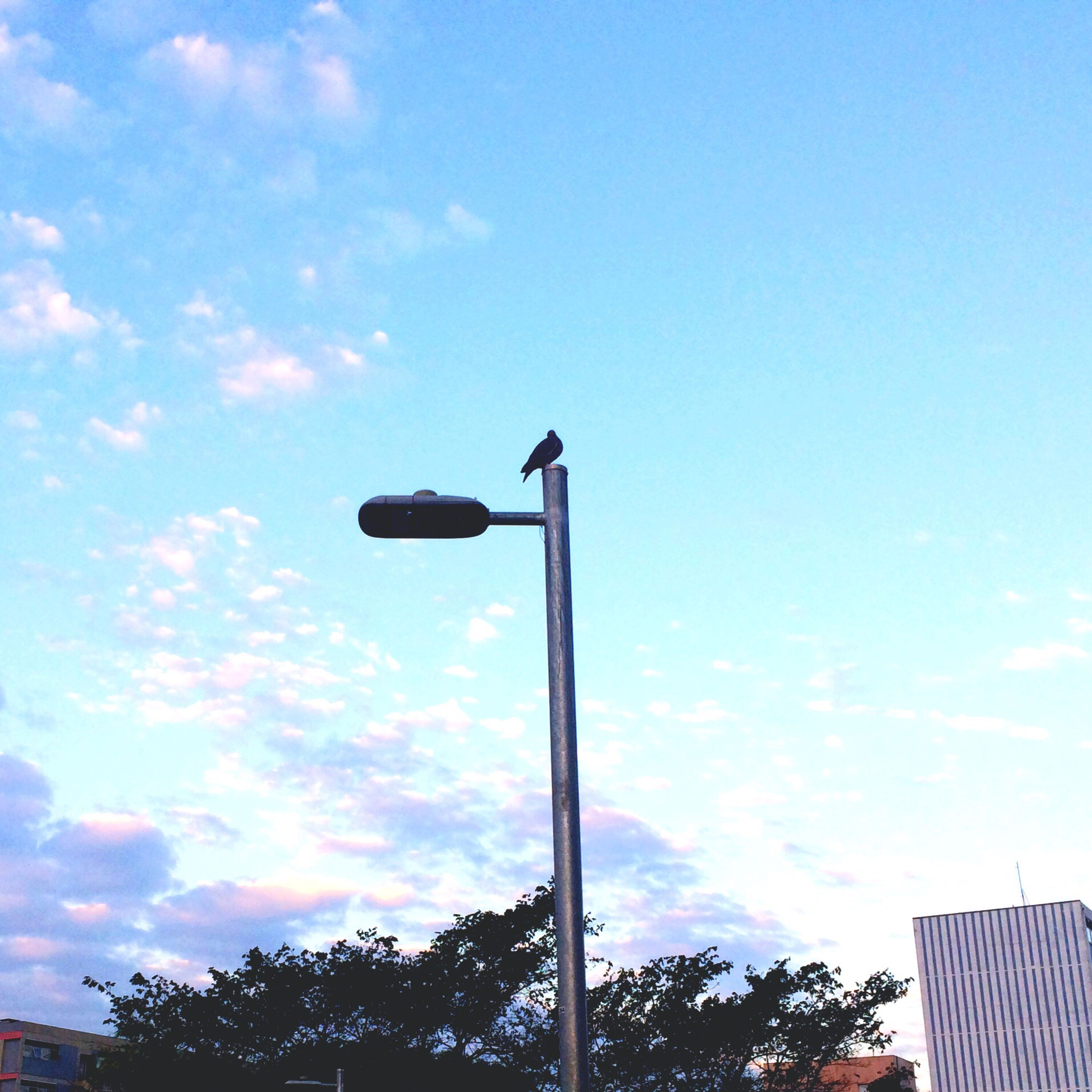 low angle view, sky, bird, animals in the wild, street light, day, no people, flag, animal themes, outdoors, tree, perching, nature