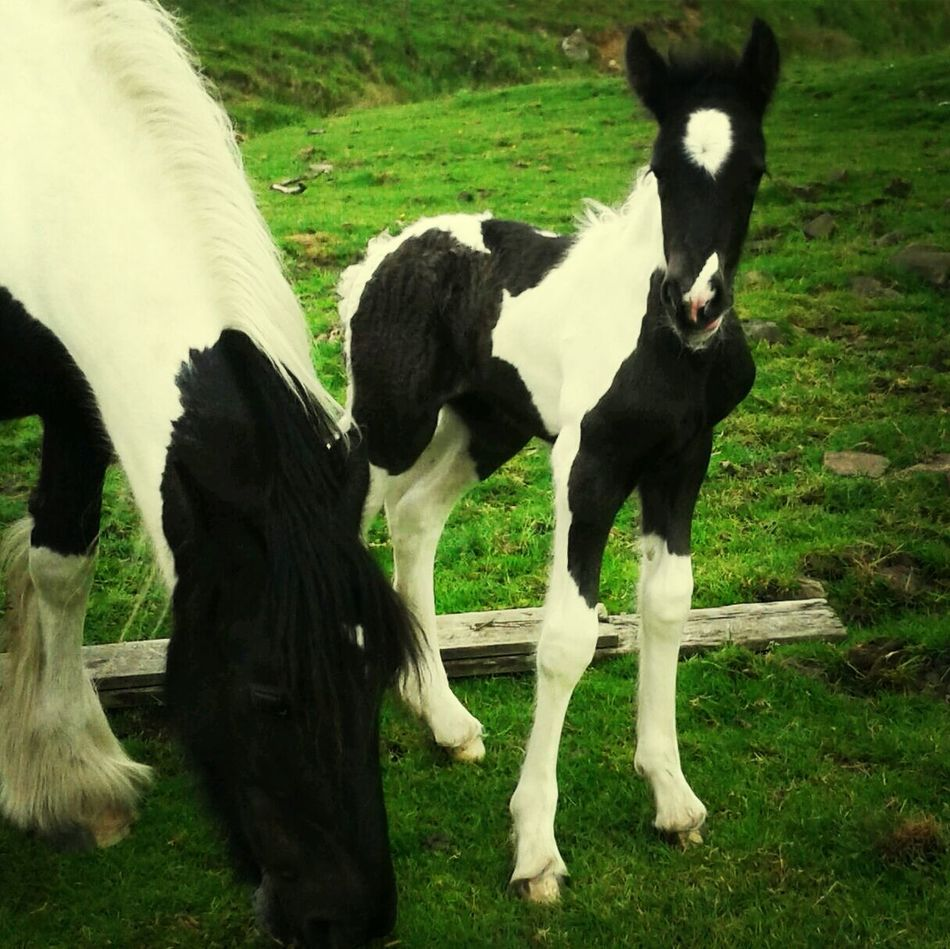 Flicker and her pretty foal! Horses Foal Mare Coloured