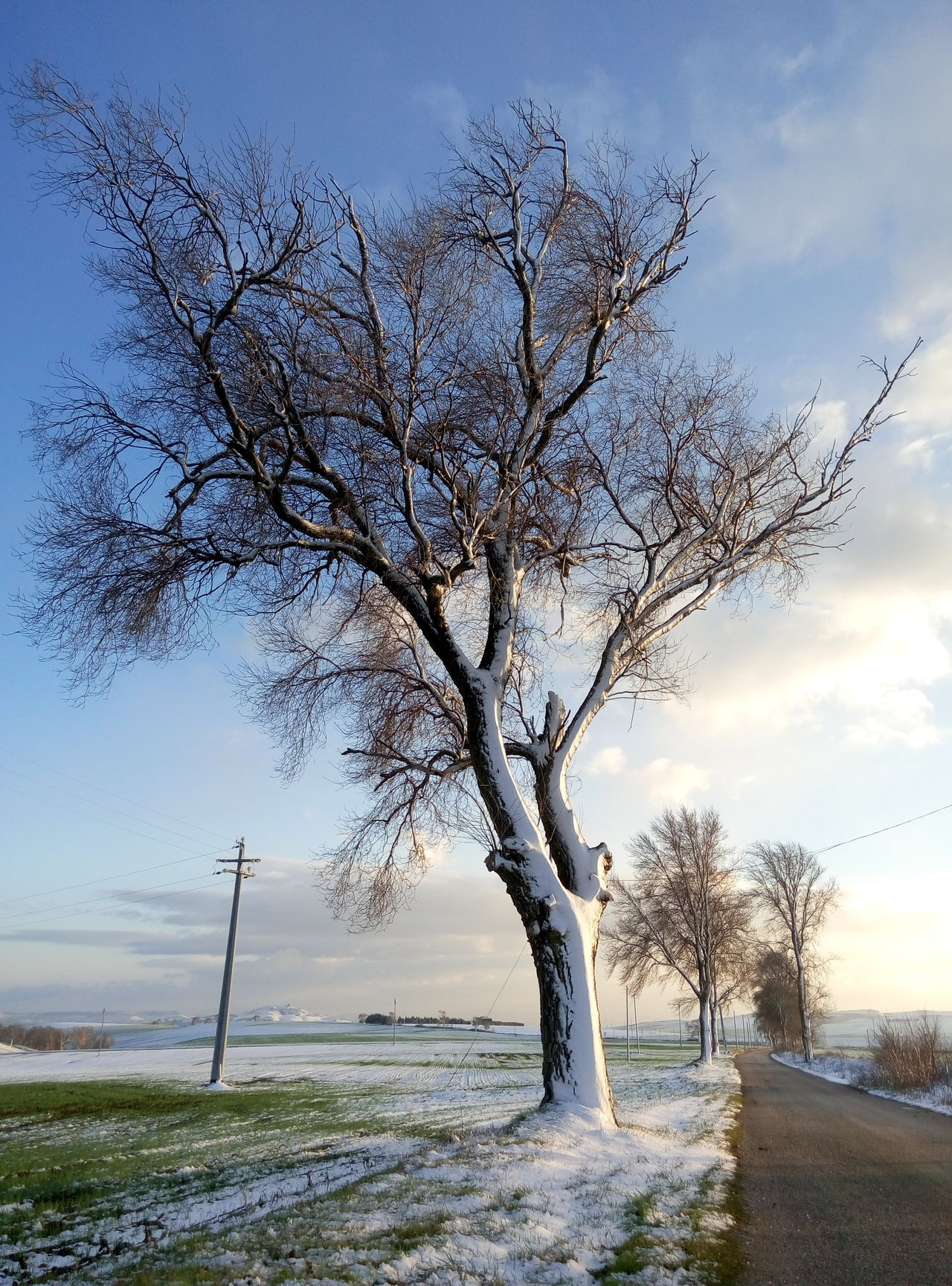 Snow Tree Landscape_photography Landscape Lonely White Panoramic Landscape Road Blue Sky Trees Tree_collection  Trees And Sky Tree Art Tree Roots  Treelovers Tree And Sky Treescollection Relaxing White Clouds Softness Lonelysnow