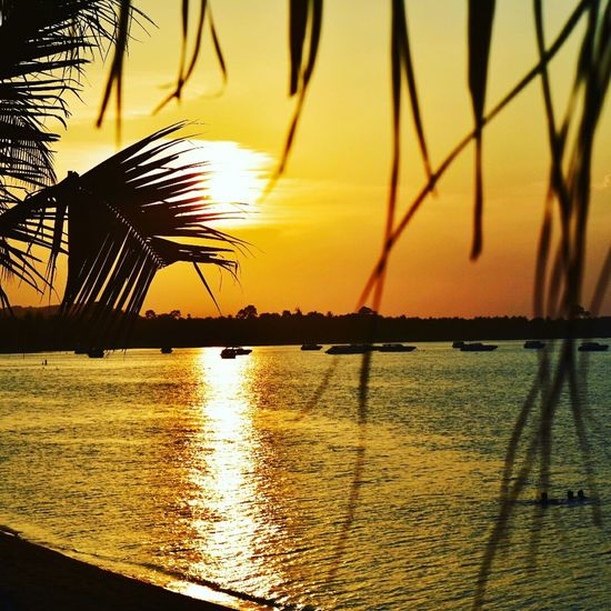 No words, just a photo Sunset Silhouette Sea Beach Scenics Water Nature Beauty In Nature Sky Tree Sun Sunlight Dramatic Sky Tranquility Palm Tree No People Outdoors Travel Destinations Tranquil Scene Summer Thailand Kohsamui Nightphotography ThailandOnly Thailand Trip Perspectives On Nature