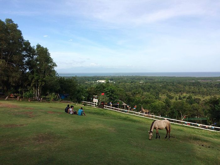 What a wonderful view! ☺😍😮 Nature Sky Grass Domestic Animals Real People Beauty In Nature Day Outdoors Puerto Princesa City Palawan Philippines EyeEm Best Shots Eyeem Philippines Travel Traveling Home For The Holidays Finding New Frontiers Adventure Vacations EyeEm Nature Lover