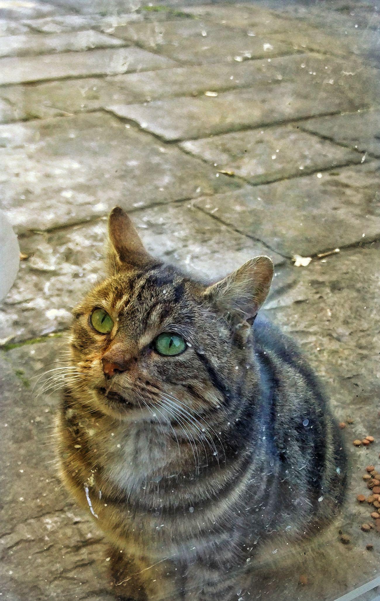 Cat Cats 🐱 Kitten 🐱 Grey Rainy Days Cat In Rain EyeEmNewHere