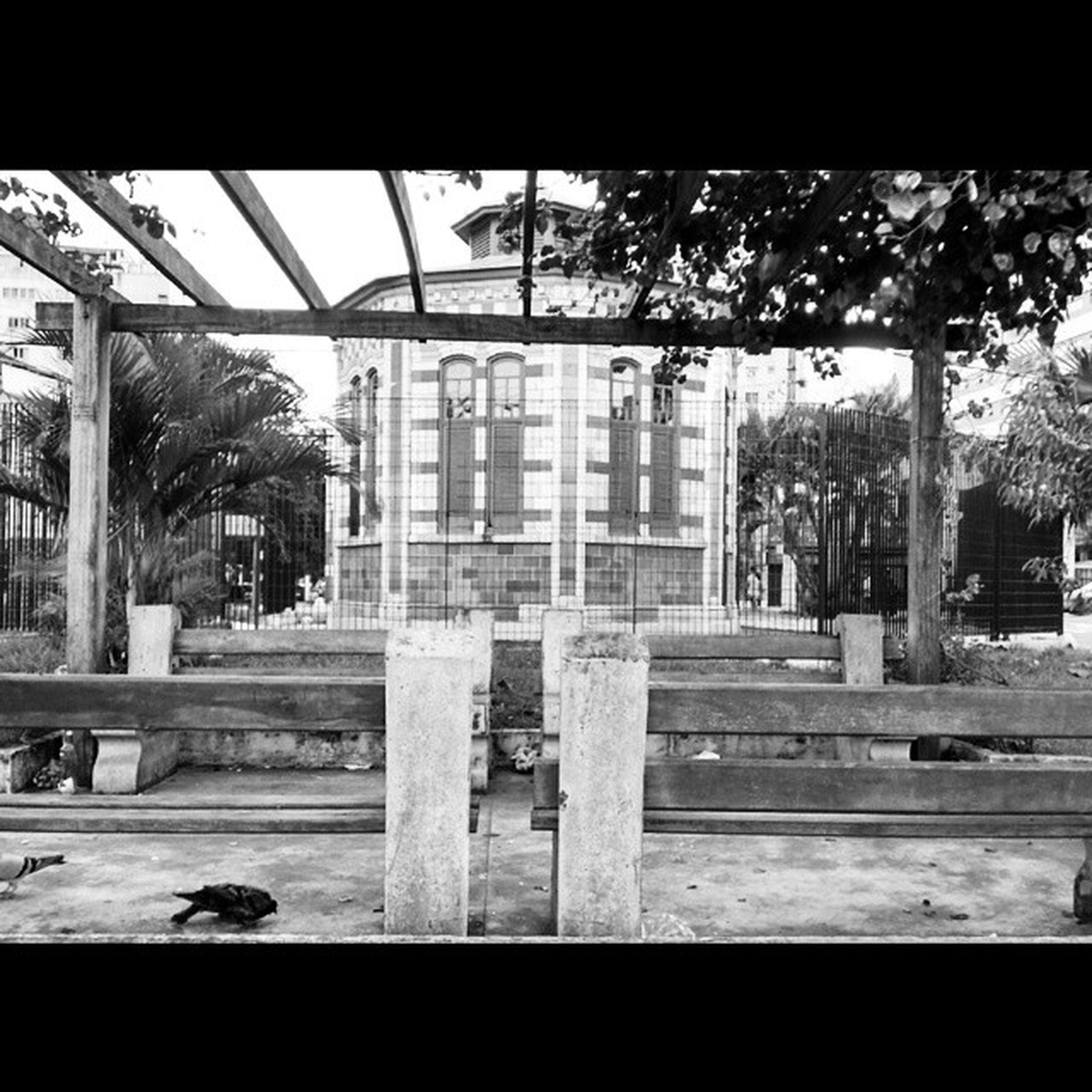 08h40 Saovicente Gibiteca Gibi Instahq Instaphoto Birds