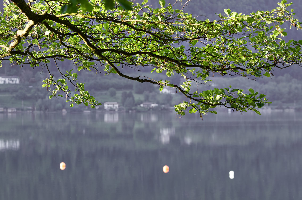 Austria Branch Of A Tree Daylight Depth Of Field Green Leaves. Lake Landscape Nature No People Ossiacher See Reflections Water