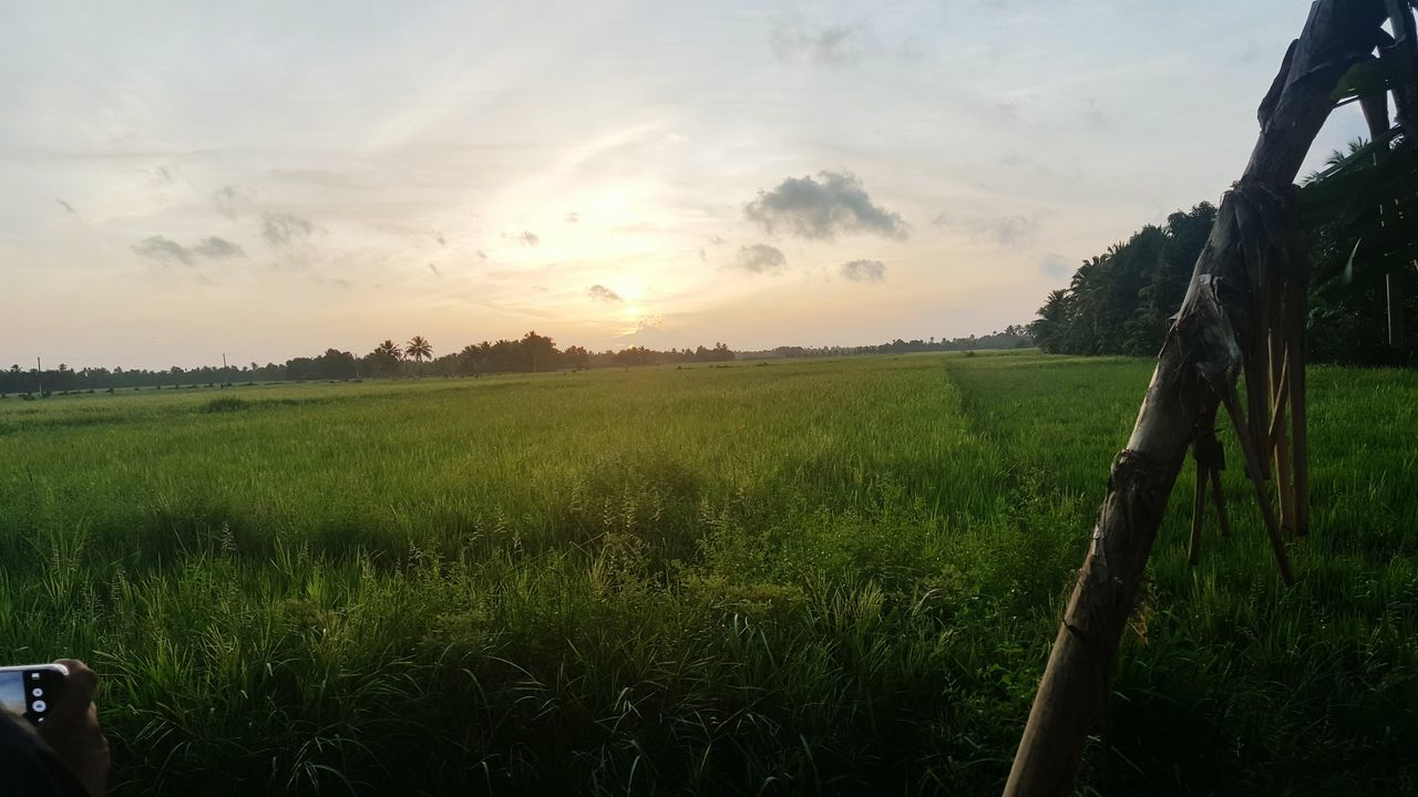 Parippu Sunset Social Issues Agriculture Environmental Conservation Rice Paddy Rice - Cereal Plant Landscape Beauty Growth Igniting Outdoors Nature Beauty In Nature Cloud - Sky No People Day Sky
