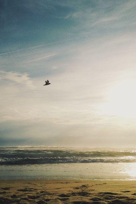 Throwback. Life Is A Beach Surf Beach Life Ocean Birds