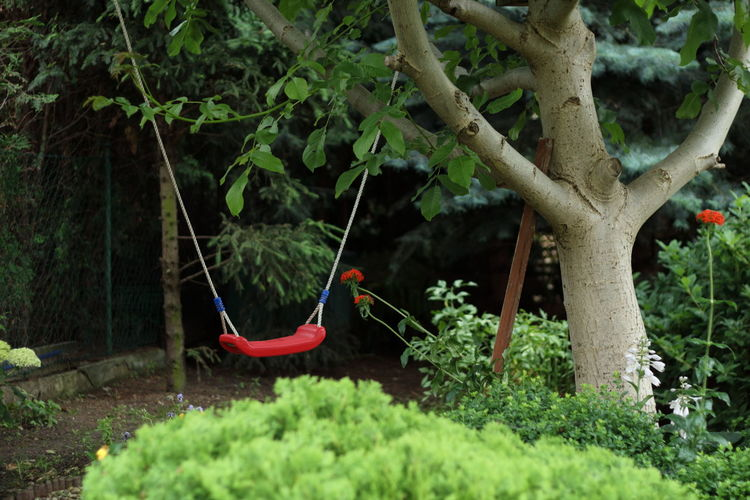 Tree Outdoors Growth Hanging Plant Nature No People Branch Day Garden Beauty In Nature Swing Lonely Alone Green Red
