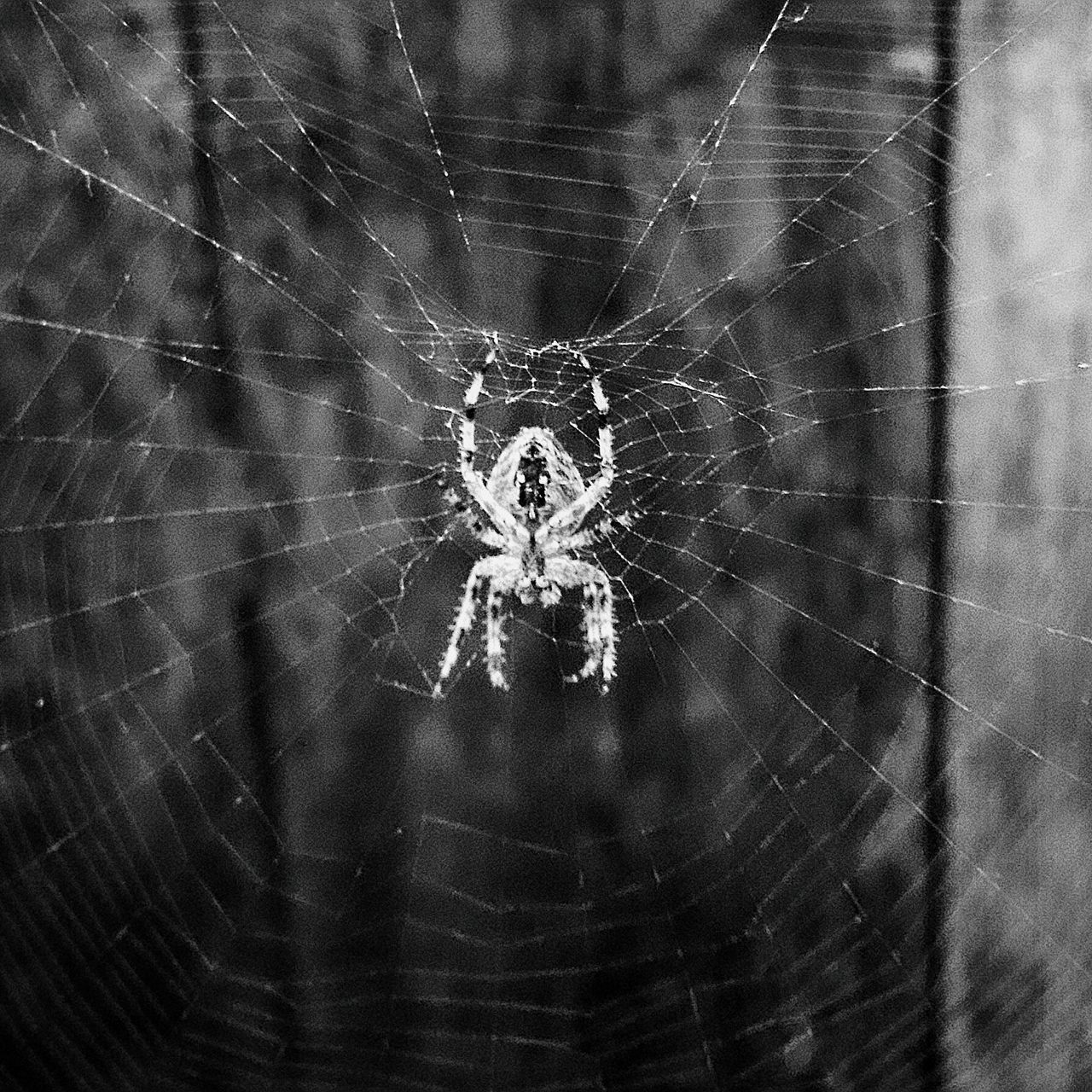 Spider Animal Themes Nature Outdoors Spider Frommypointofview Beauty In Nature From My Point Of View EyeEmGalley
