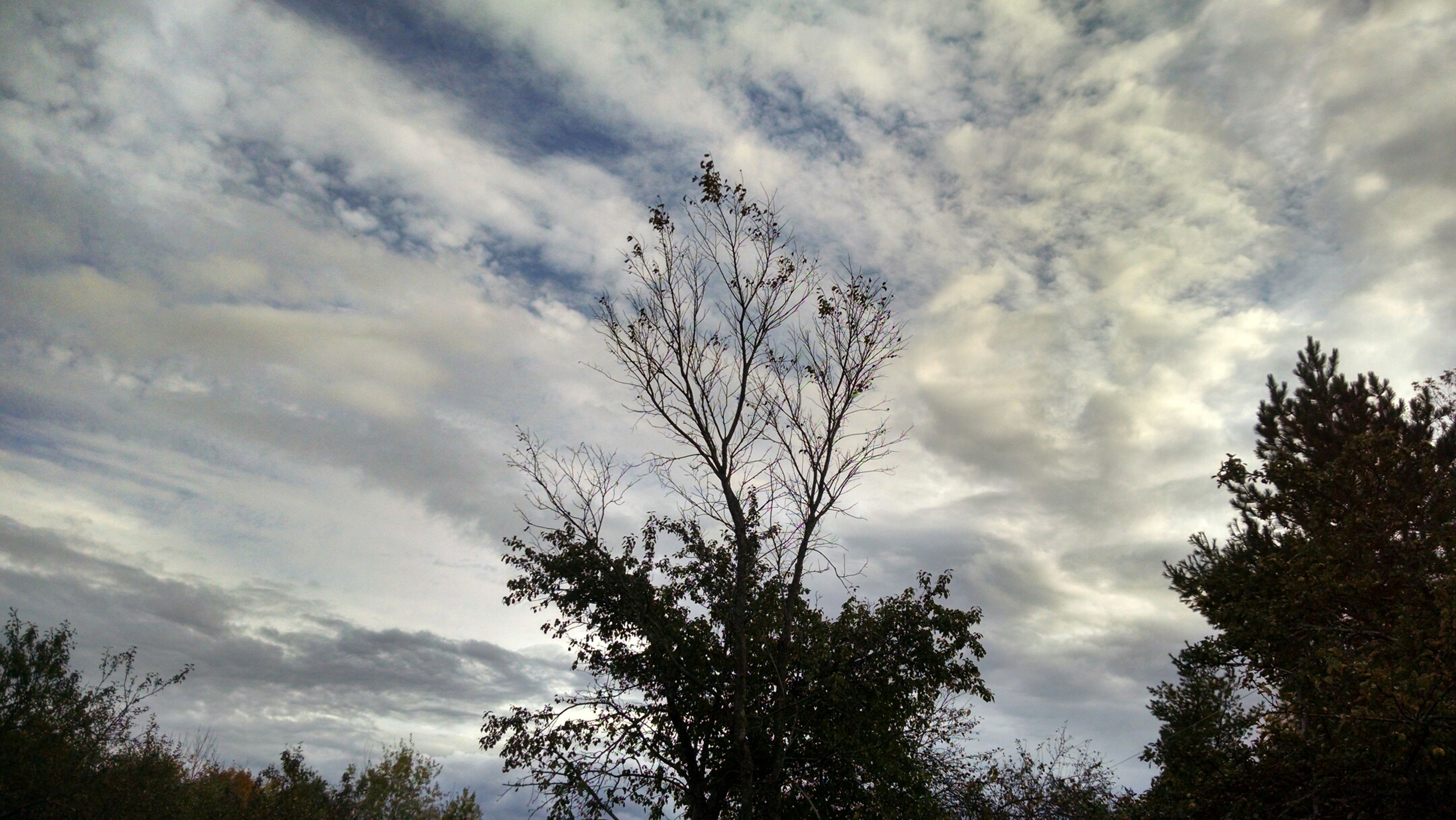 tree, low angle view, sky, cloud - sky, silhouette, tranquility, cloudy, branch, beauty in nature, bare tree, nature, cloud, tranquil scene, scenics, growth, outdoors, no people, day, treetop, high section