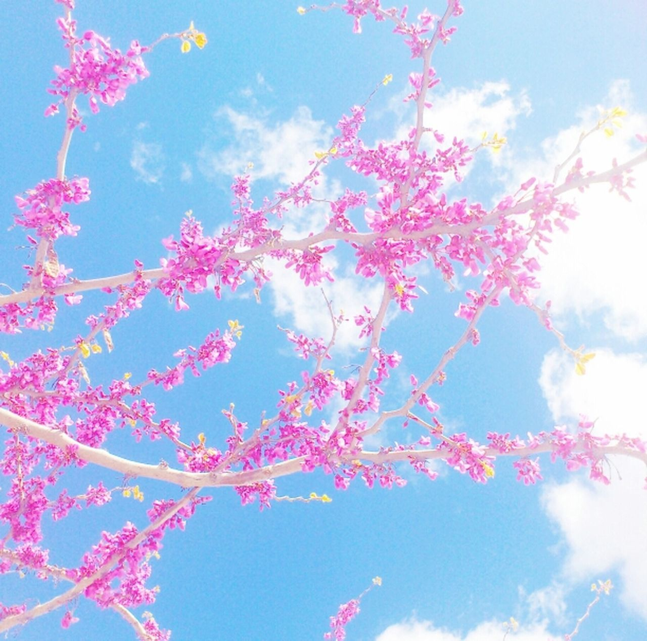 Walking Around Looking Up Enjoying The Sun The Minimals (less Edit Juxt Photography) Florecitas Softcolors