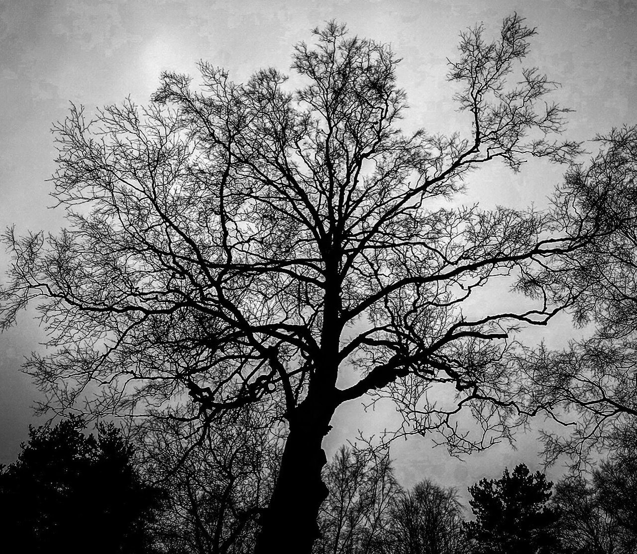 tree, branch, nature, sky, bare tree, growth, beauty in nature, outdoors, low angle view, tranquility, silhouette, landscape, no people, scenics, day